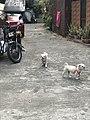 Dogs walking on a street.jpg