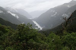 Doubtful Sound Deep Cove.jpg