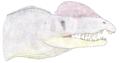 DracovenatorLb.png