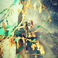 Dragon fly on green leaves.jpg