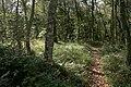 Draved-Skov-lysning4.jpg
