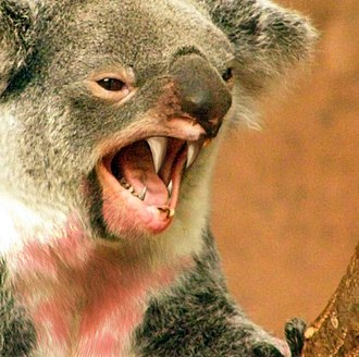 Drop bear - Artistic depiction of a drop bear