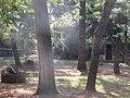 Drvece u parku (13).jpg