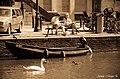 DutchPhotoWalk Amsterdam - panoramio (14).jpg