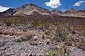 East bajada of Bennett Mountain - Flickr - aspidoscelis (2).jpg