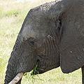 Eastern Serengeti 2012 05 31 2972 (7522617956).jpg