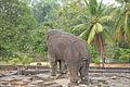 Eléphant monolithe du Bakong (Angkor) (6814012354).jpg