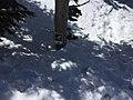 Eldorado National Forest - Social 45.jpg