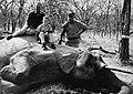 Elephant hunt with Urquijo.jpg