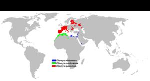 Eliomys - Image: Eliomys range map