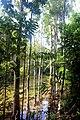 Emerald pool park, Krabi provice, Thailand 2018 3.jpg