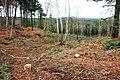 Emperor's Hill - geograph.org.uk - 1706912.jpg