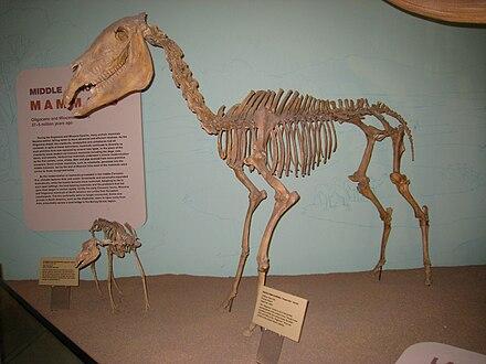 Hagerman Horse Wikiwand