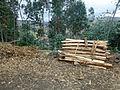 Ethiopie-Exploitation de l'eucalyptus (11).jpg