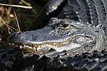 Everglades, ABD
