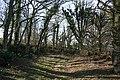 Exbourne, copse - geograph.org.uk - 329565.jpg
