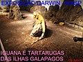 Exposição Charles Darwin - MASP - São Paulo - panoramio.jpg