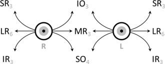 Eye movement - Schematic demonstrating the actions and cranial nerve innervation (in subscript) of extraocular muscles.