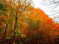 Fall Foliage at Holy Hill - panoramio.jpg