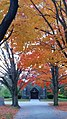 Fall in St Patrick Cemetery, Lowell, MA.jpg