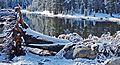 Fallen, Tioga Lake, Yosemite 5-20-15a (17653395484).jpg