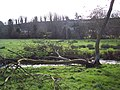 Fallen tree over River Ebble in Broad Chalke - geograph.org.uk - 350135.jpg