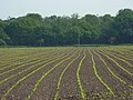 Farmland, Binfield - geograph.org.uk - 814112.jpg