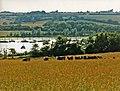 Farmland and Medina River, Whippenham, Isle of Wight - geograph.org.uk - 886115.jpg