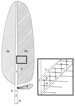 konturfeder wikipedia. Black Bedroom Furniture Sets. Home Design Ideas
