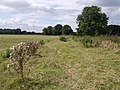 Field beside Mill Stream - geograph.org.uk - 542892.jpg