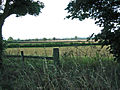 Fields next to School Lane, Buckminster - geograph.org.uk - 41036.jpg