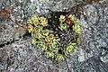 Fiori nella roccia.jpg