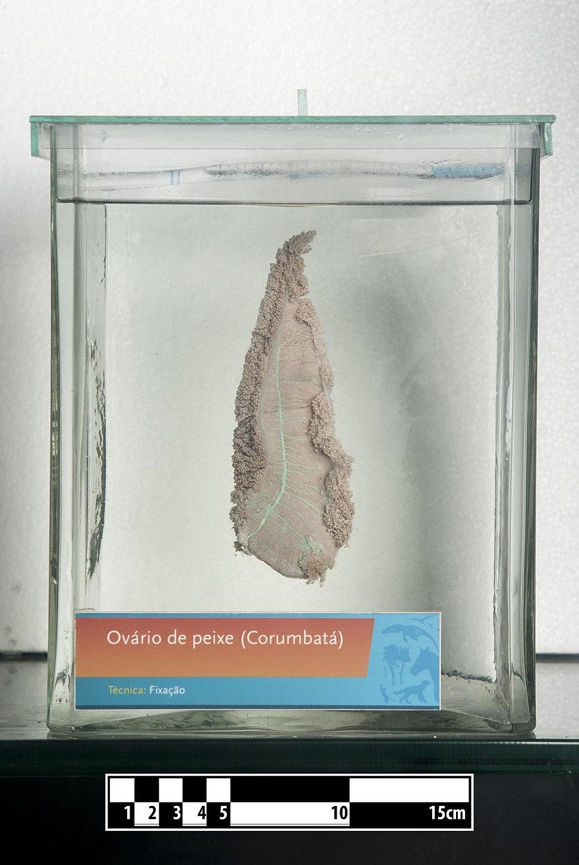 Fish ovary- FMVZ USP-27
