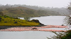Flamingos at Arusha National Park.jpg