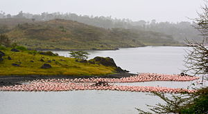 Arusha National Park - Image: Flamingos at Arusha National Park