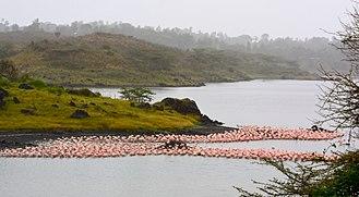Arusha National Park - Image: Flamingos at Arusha National Park