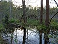 Flooded path in the Teufelsbruch swamp 31.jpg