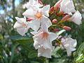 Flor desconocida 2499.jpg