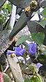 Flor no cacto - panoramio (1).jpg