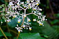 Flora 0055.jpg