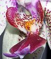 Flower (2238161399).jpg