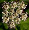 Flower (6302673656).jpg