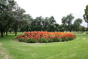 Adelaide Park Lands - Flower bed in the Adelaide Park Lands
