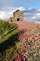 Flower path in Monsaraz (Rosino).jpg