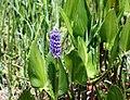 Flowers 3 (6908523362).jpg