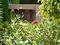Flowers in the garden.jpg