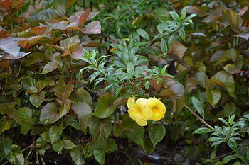 Flowers yellow colour.jpg