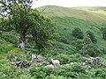 Foel (Ty Unnos, Ruin) Cwm Doethie, Ceredigion - geograph.org.uk - 511311.jpg