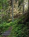 Footbridge and a sunny slope in Gullmarsskogen ravine.jpg