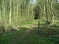 Footpath, West Wood - geograph.org.uk - 393080.jpg